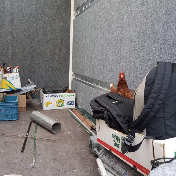 Bild von einem Huhn, das hinter Rucksäcken vorher schaut